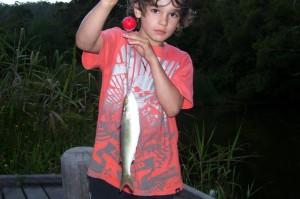 noah fish